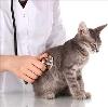 Ветеринарные клиники в Каспийске